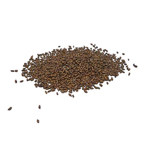 决明子 (Cassia seed/Semen Cassiae)