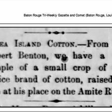 News article about cotton.jpg