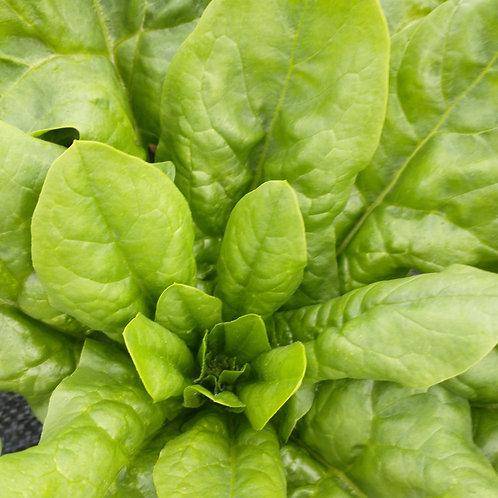 Spinach - Organic