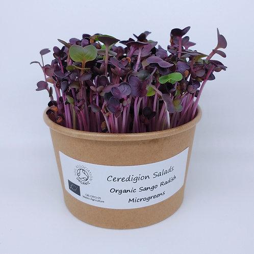 Sango Radish Microgreen Live Pot