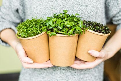 microgreen pea sprouts, microgreen beetr