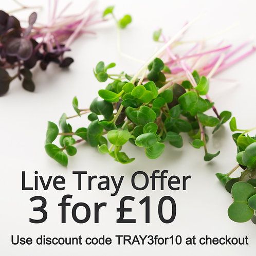 3 for £10 Live Trays