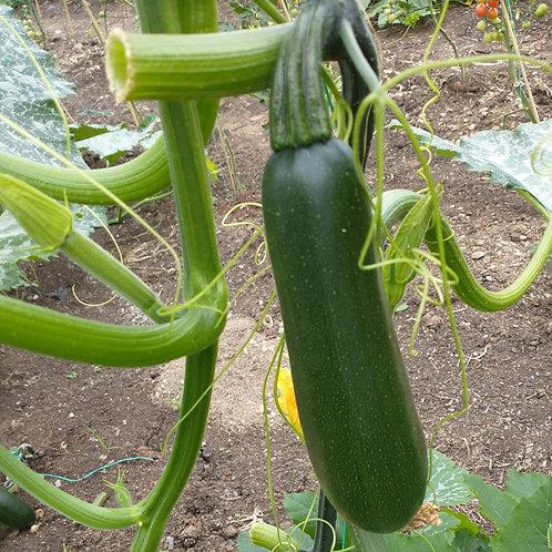 Courgette - Organic