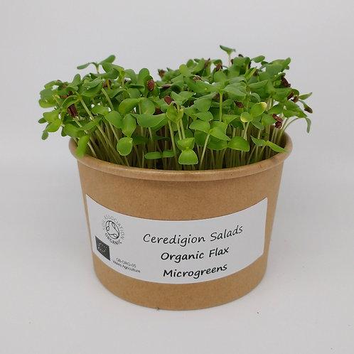 Flax Microgreen Live Pot