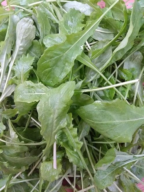 Salad Rocket