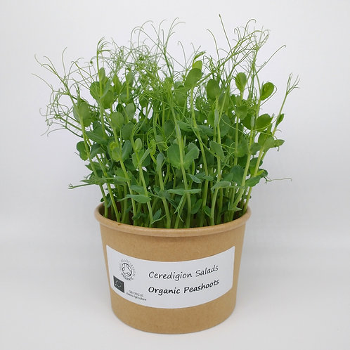 Peashoot Microgreen Live Pot