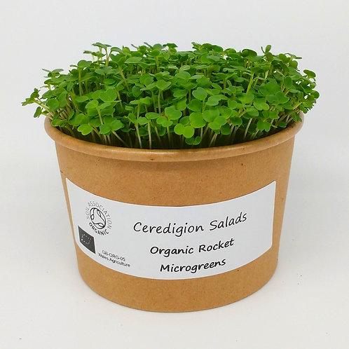 Rocket Microgreen Live Pot