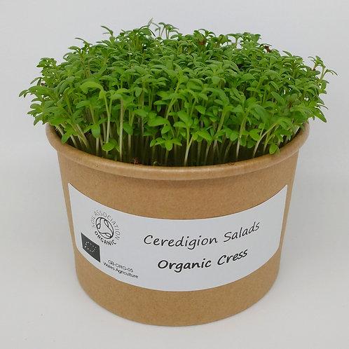 Curly Cress Microgreen Live Pot