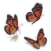 three-monarch-butterfly-thawats.jpg