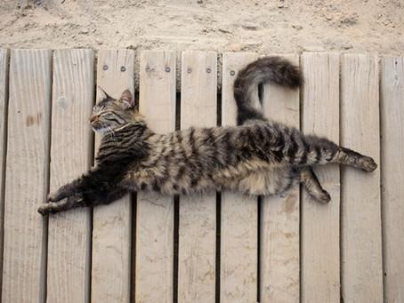 Laisser votre chat sortir en vacances : fausse bonne idée?