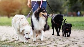 Le métier de dog-walker