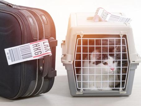 Comment bien faire voyager son chat ?