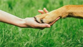 Canis empathicus : mythe ou réalité ?