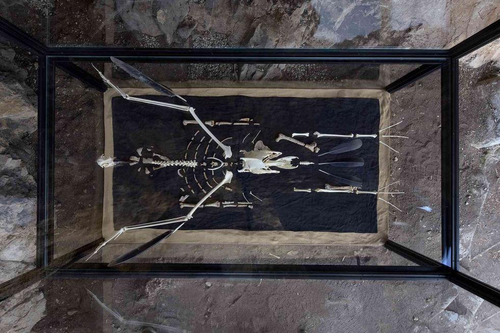 Une réplique de « Lucy », l'ensemble d'os fossilisés vieux de 3,2 millions d'années qui a révélé que l'évolution n'a pas suivi une ligne droite entre les grands singes et les êtres humains.