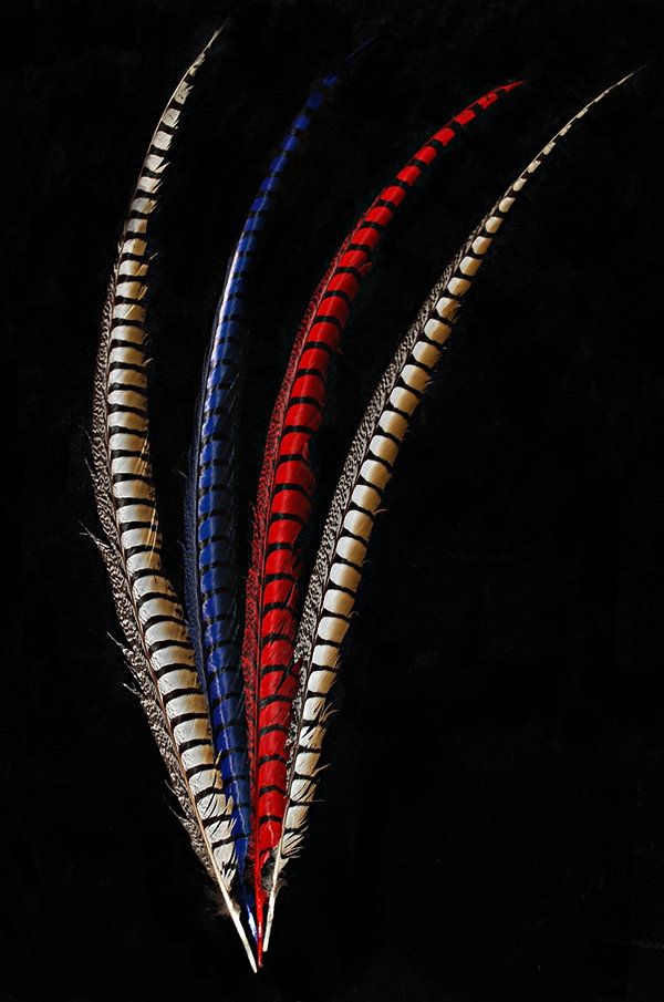 Pheasant Lady Amhurst Side Tails