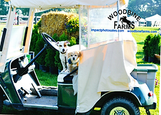 Dogs golf cart.png