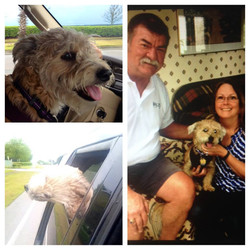 Banjo going to new home and with new family.jpg