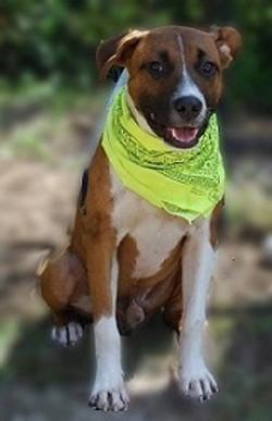Cujo scarf pic.jpg