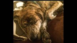 Pepper Charlie sleeping.jpg