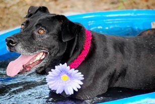 Blu in pool.jpg