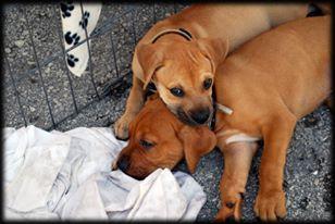 gville pups.jpg