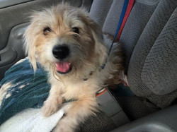 Ben on way to foster home