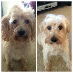 Benji before and after.jpg