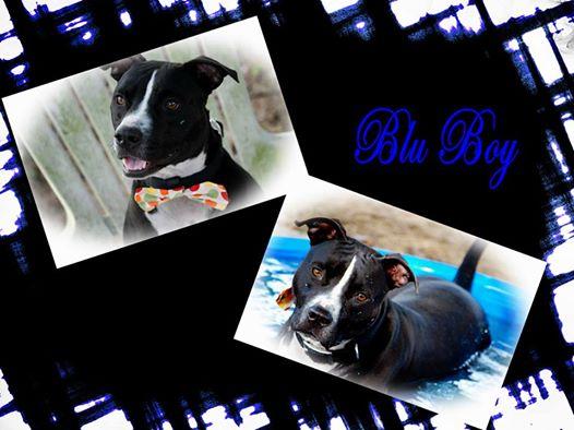 BB collage.jpg