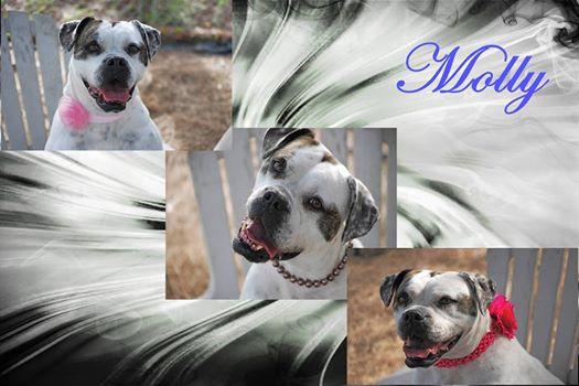 Mollys collage.jpg