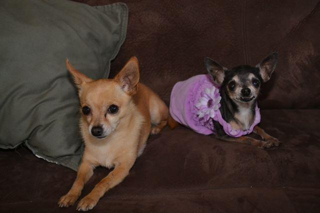 Mia and MIno.jpg