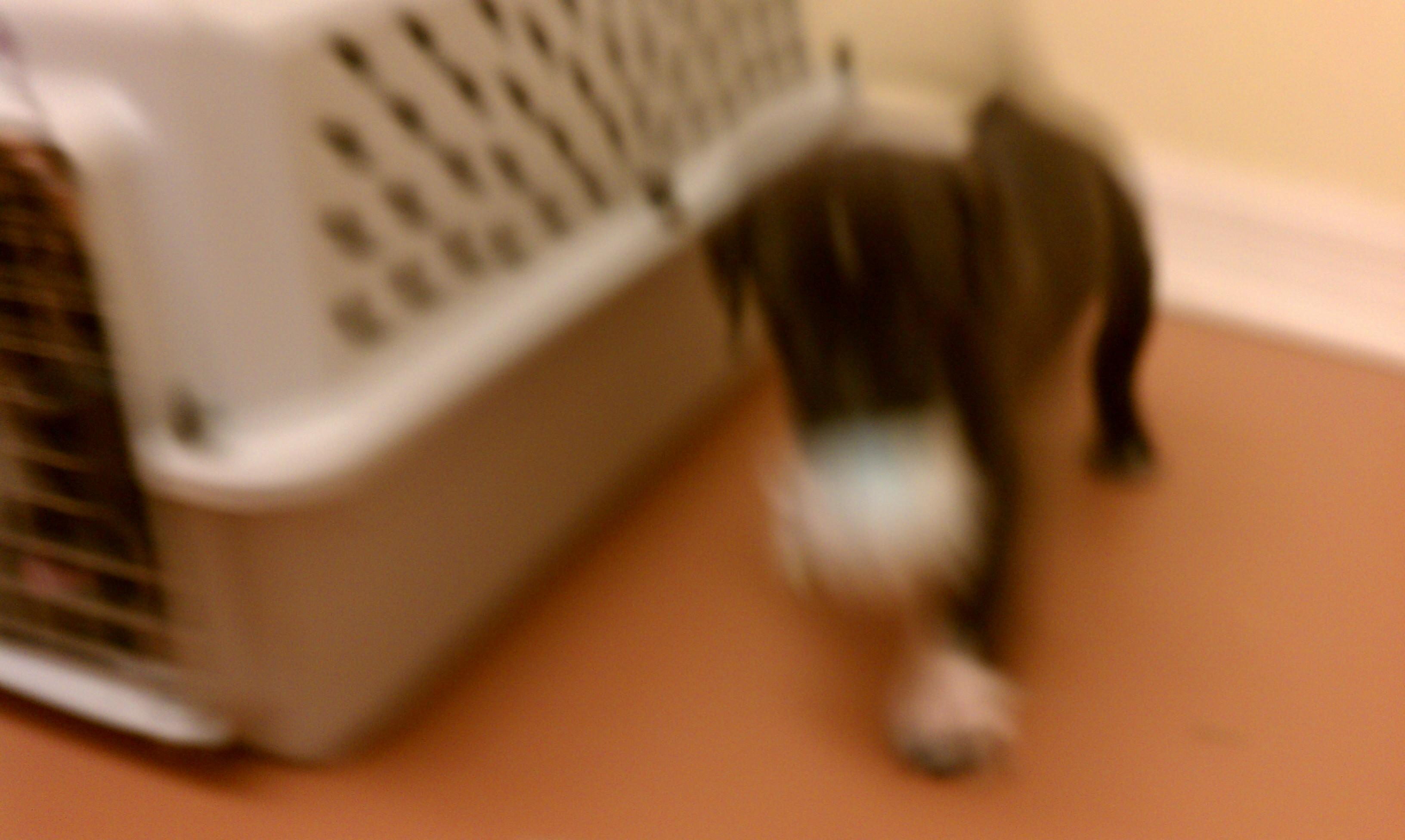 Della as pup 2011.jpg