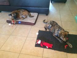 Pepper getting settled in with Chloe.JPG