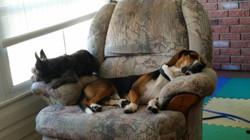 Cutch napping.jpg