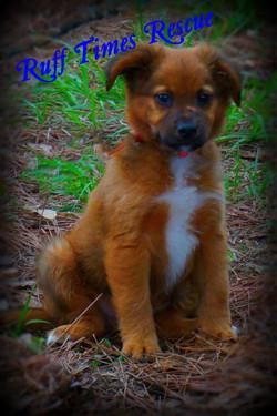 Sampson as a pup.jpg