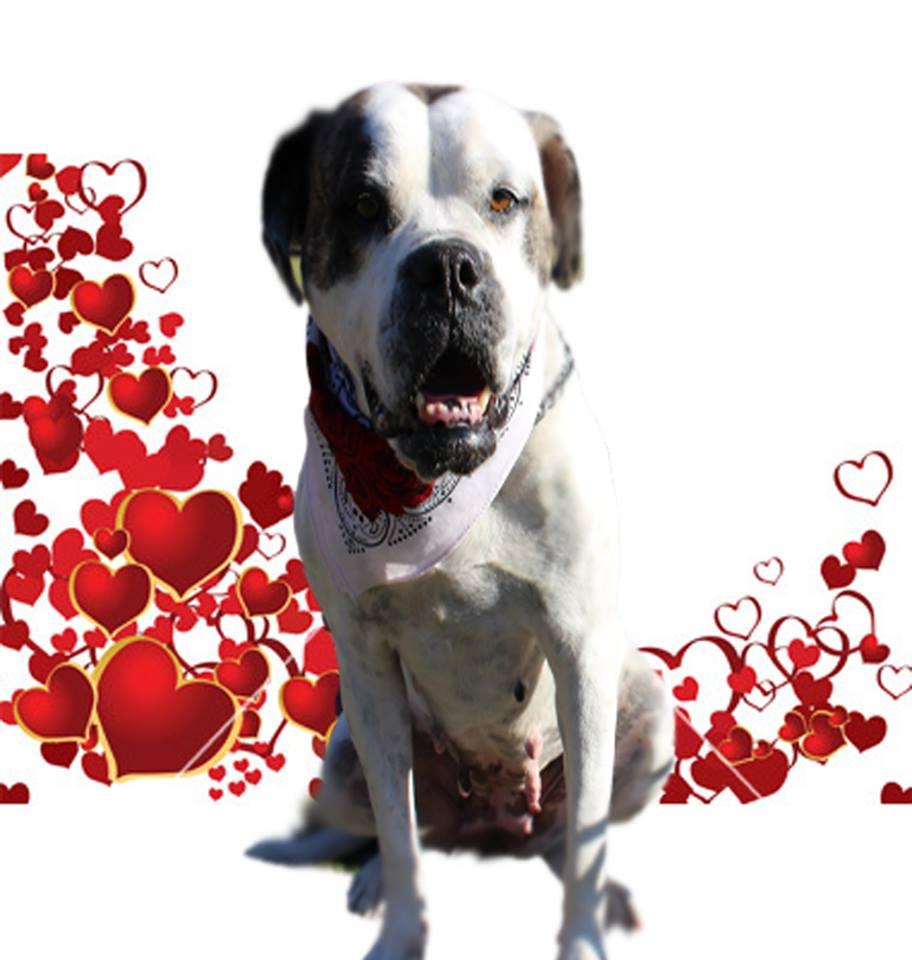 Molly hearts.jpg