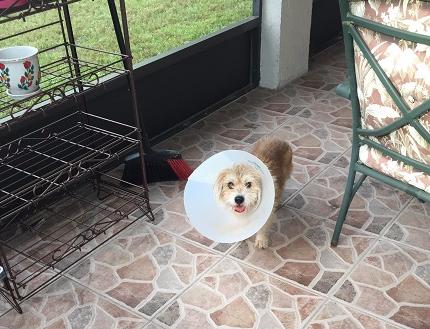 Ben after surgery_edited
