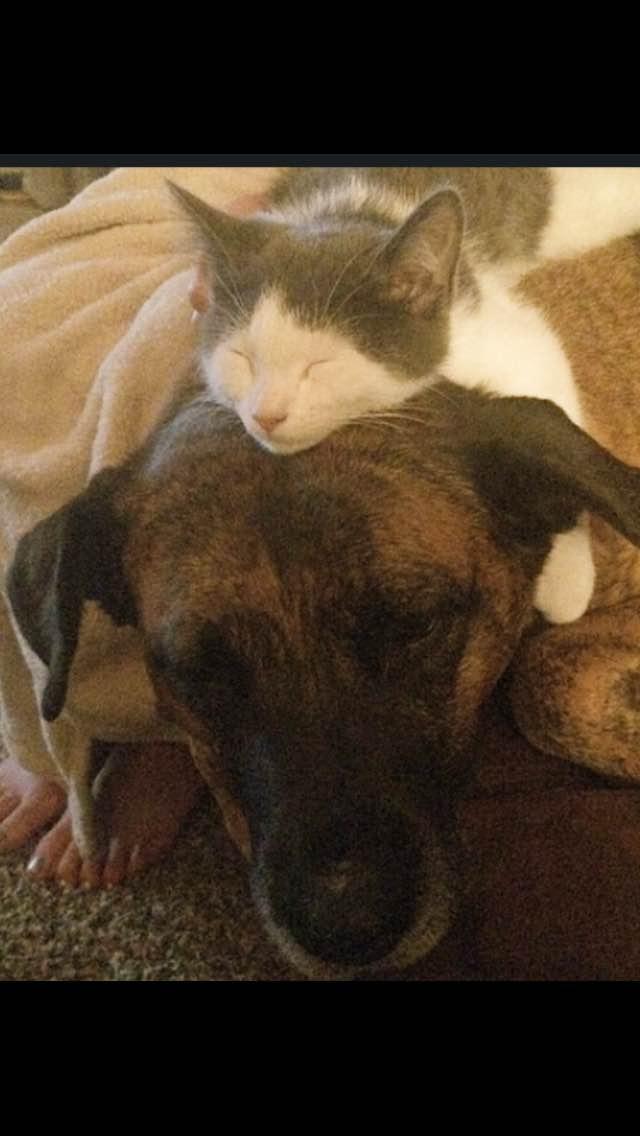 Pepper Sis Chloe and Kitty.jpg