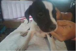 webster pup 1.PNG
