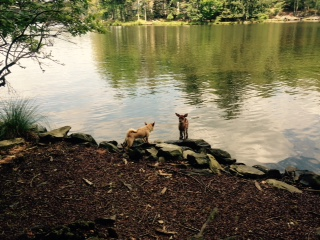 Shaggy and Bambi.jpg
