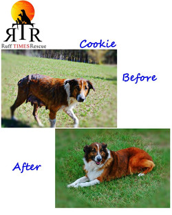 Cookie before and after.jpg