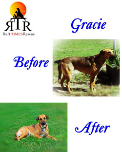 Gracie before and after.jpg
