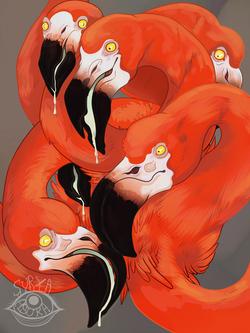 flamingohydra