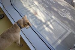 Jsme pet-friendly!