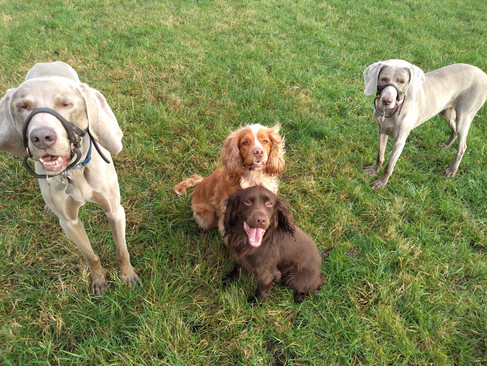 Fudge and Ben in the middle