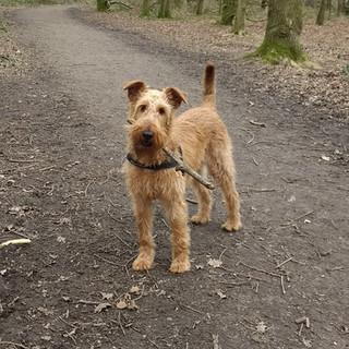 Hi I'm Alfie