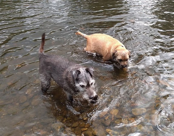 Ted and Oscar cooling down on their walk