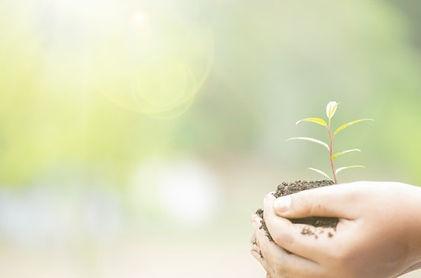 earth-day-hands-trees-growing-seedlings-