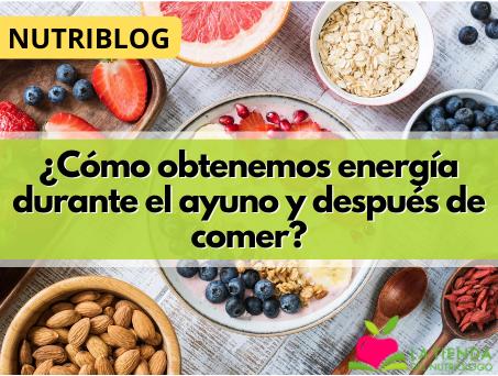 ¿Cómo obtenemos energía durante el ayuno y después de comer?
