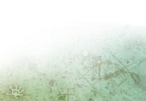 TNTG banner background.jpg