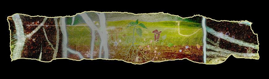 Mycelium4.jpg